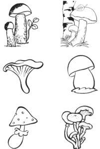 Шаблон гриба
