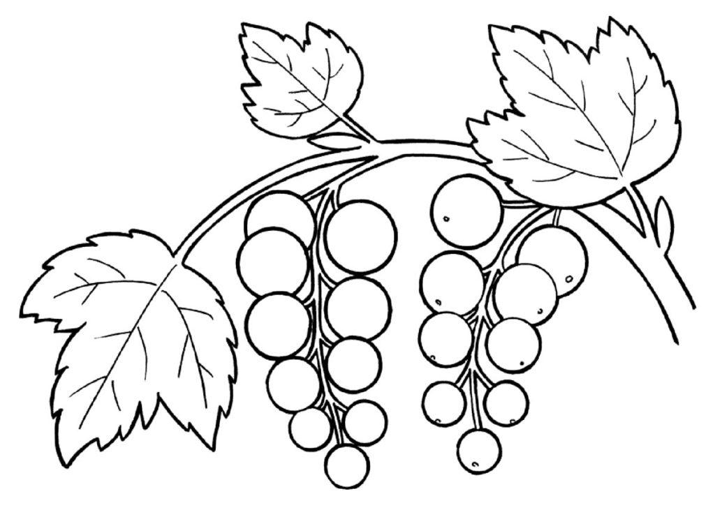 Шаблон ягод
