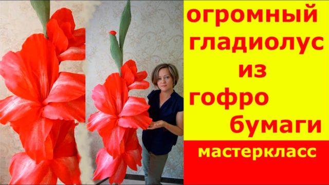 Ростовые цветы гладиолуса
