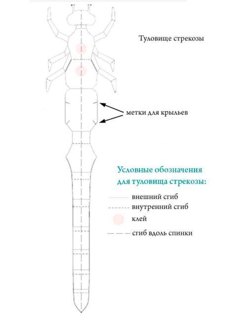 Схема стрекозы