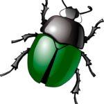 Шаблоны жука/таракана