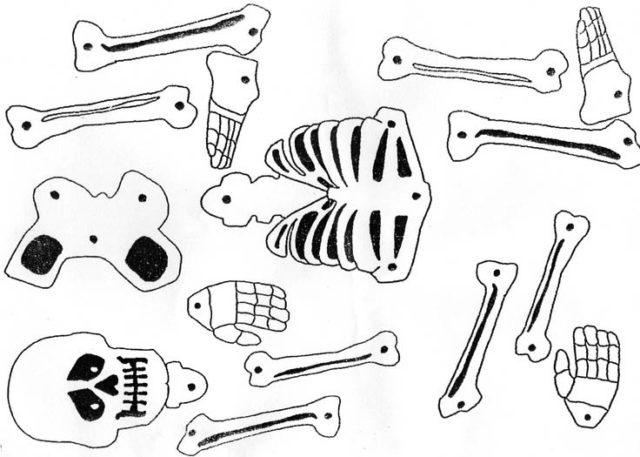Скелет, череп и кости