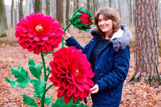 Ростовые цветы георгины