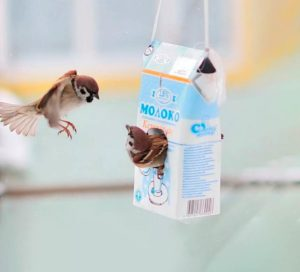 Кормушка для птиц из коробок/пакетов от молока