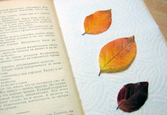 Сушка листьев в книге
